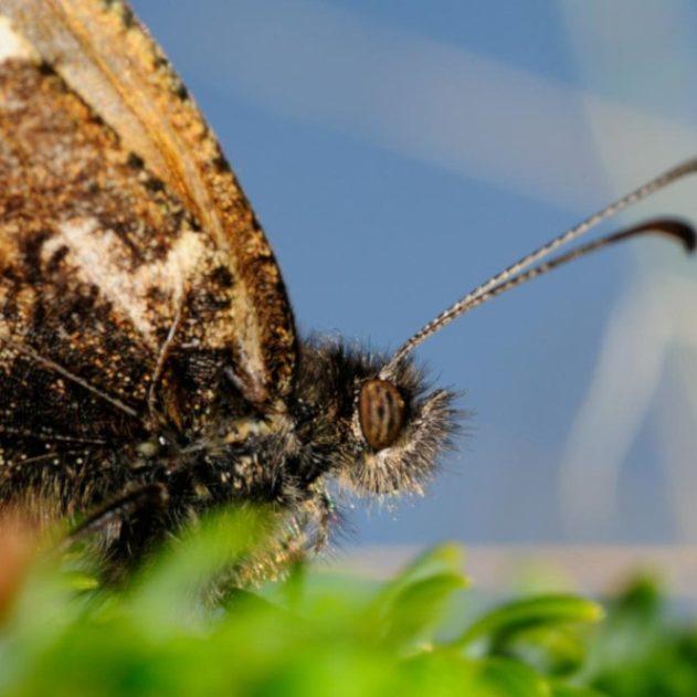 alerte extinctions espèces insectes monde