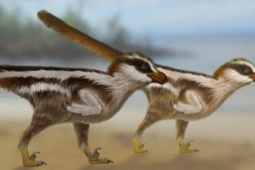 petit dinosaure