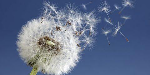 pollen mercure