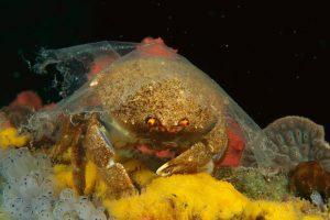 pollution plastiques danger biodiversité