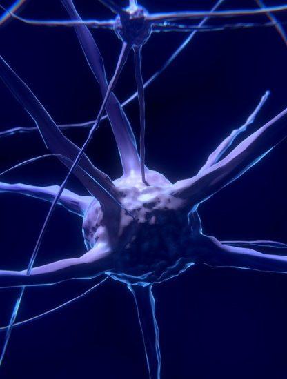 réparation cerveau suite AVC greffe neurones