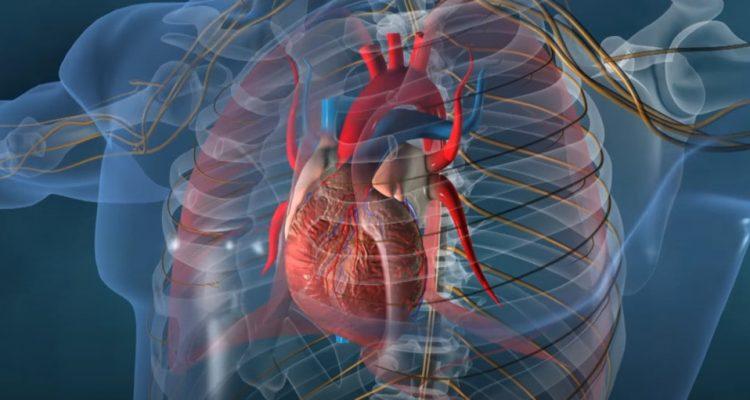 réplication cellules coeur gène cancer