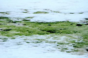 algues vertes antarctique réchauffement climatique