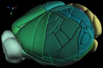 atlas 3D complet cerveau souris