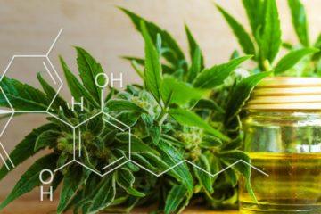 cannabis chanvre cbd huile produit type