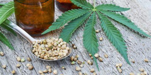 cannabis cbd thc huile