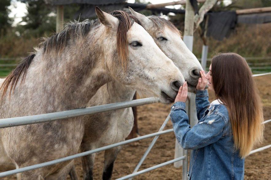 gardien cheval reconnaissance faciale