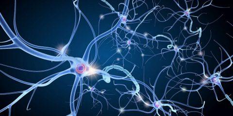 neurone communication
