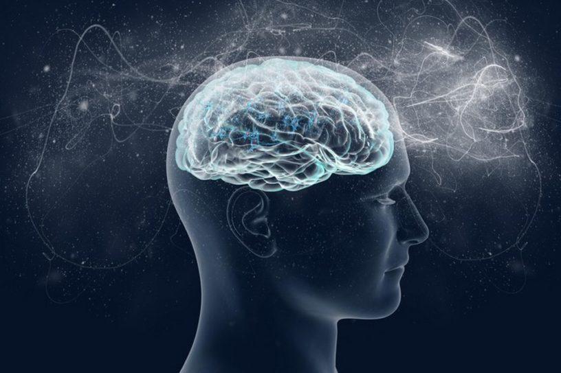 conscience mouche à fruit humain humaine neurologie cerveau