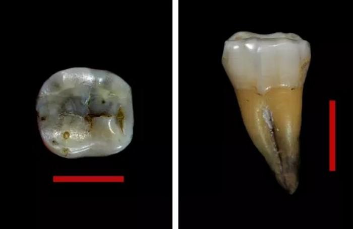 dent outils objets artefacts pierre ossement os homo sapiens