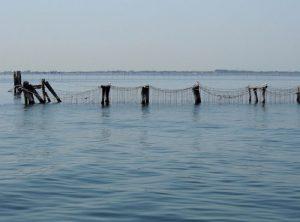 élevage moules algues