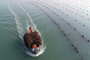ferme algues solution gaz effet de serre