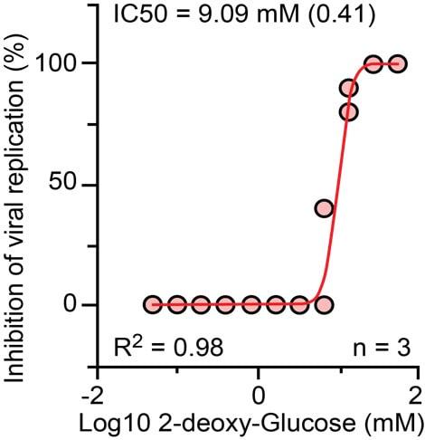 inhibiteur métabolisme glucides réplication virus
