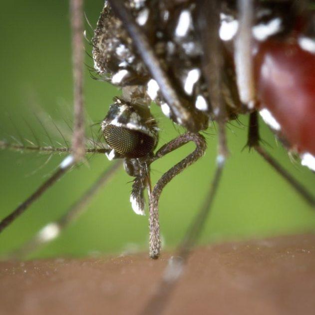 microbe moustique lutte paludisme