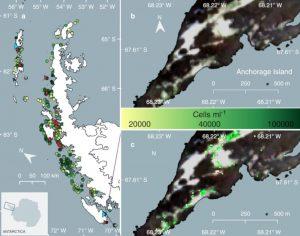 répartition algues vertes péninsule antarctique