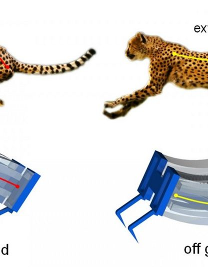 robot robotique guépard