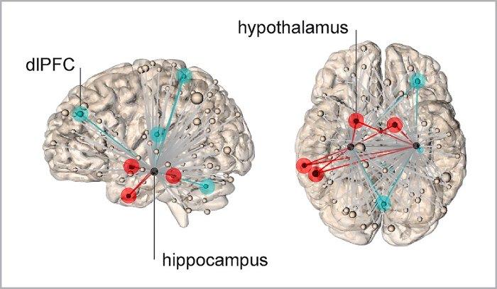 stress psychologique subjectif location cerveau