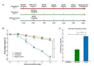 traitement SARS-CoV-2 anticorps neutralisants