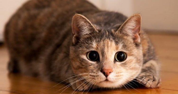 tortillement chat