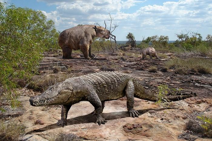 fossiles megafaune reptiles australie