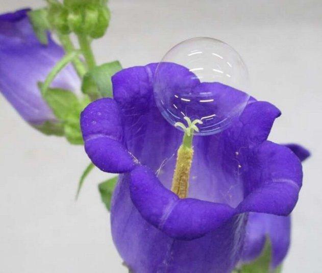 plante fleur pollen bulle drone pollinisateur