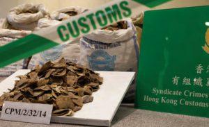 commerce écailles pangolin Chine