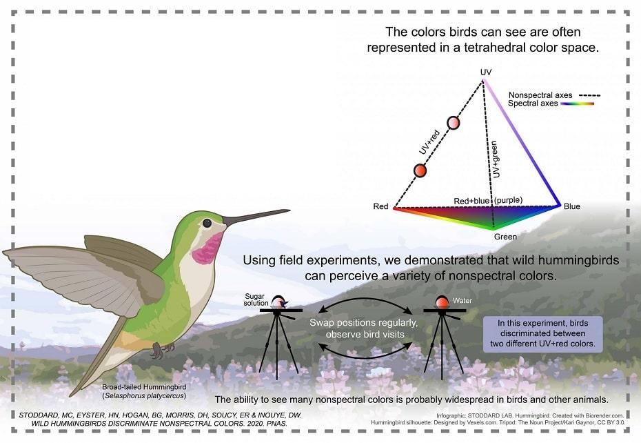 couleurs oiseaux