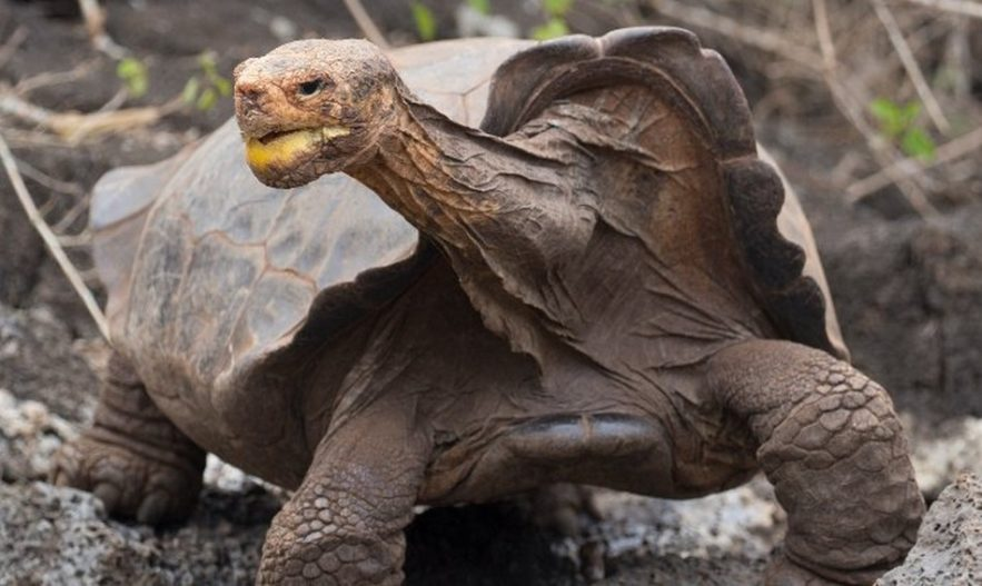 diego tortue galapagos