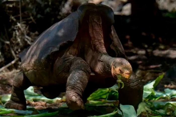 diego tortue