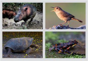 espèces vertébrés danger extinction rapide