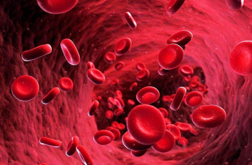 globules rouges sang