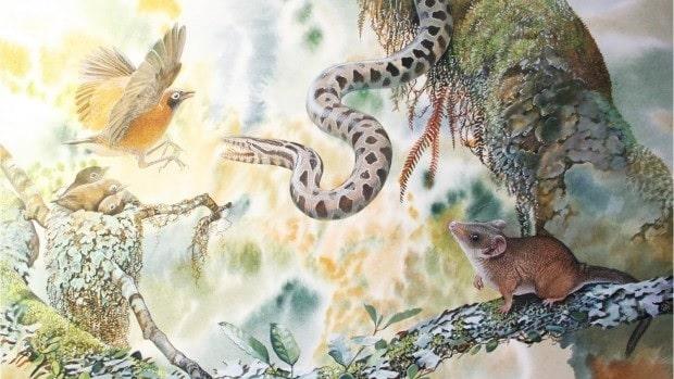 marsupial djarthia