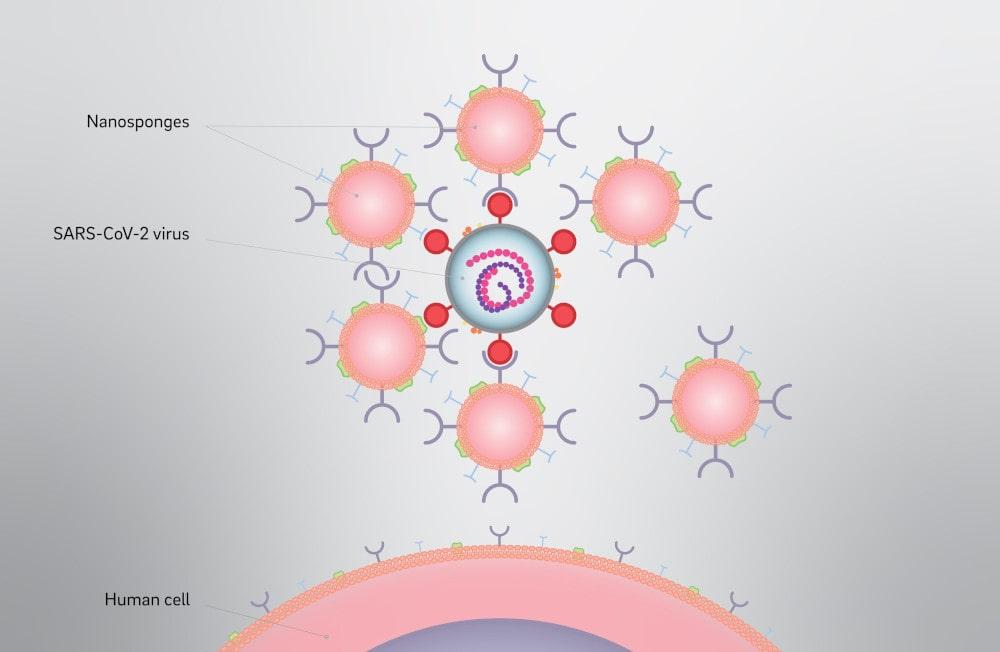 nano-éponges neutralisation SARS-CoV-2
