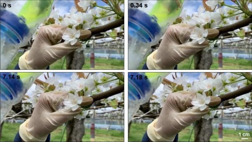 drone pollinisateur fleur arbre