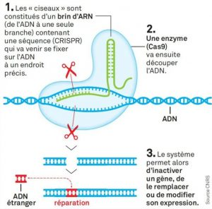 schéma principe méthode CRISPR