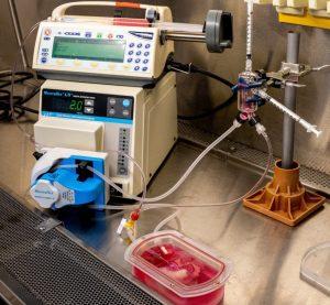 système croissance foie humain artificiel