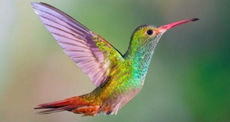 vision colibris
