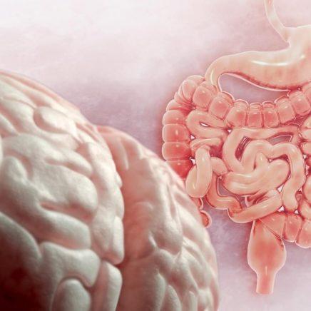 bacteries intestin cerveau