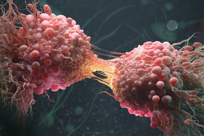 cellule cancereuse cancer acide gras