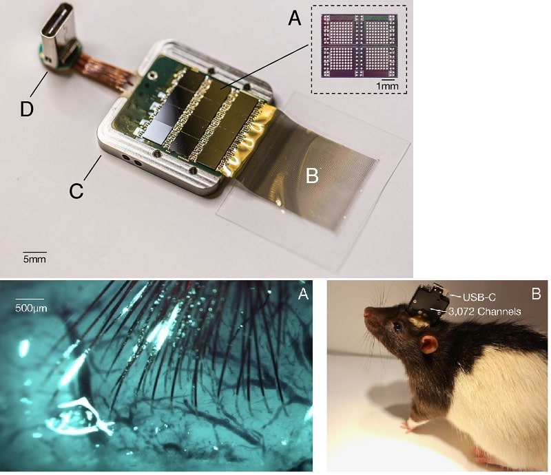 circuit implantation