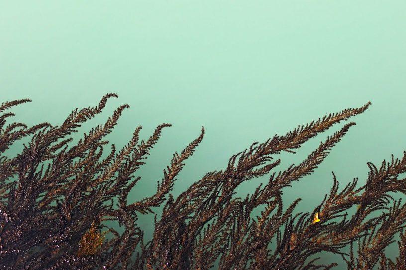 covid-19 extrait algues plus efficace que remdesivir pour bloquer coronavirus