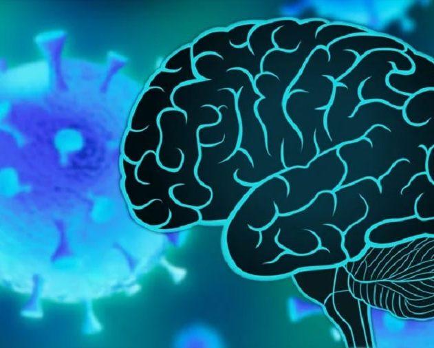 covid cerveau