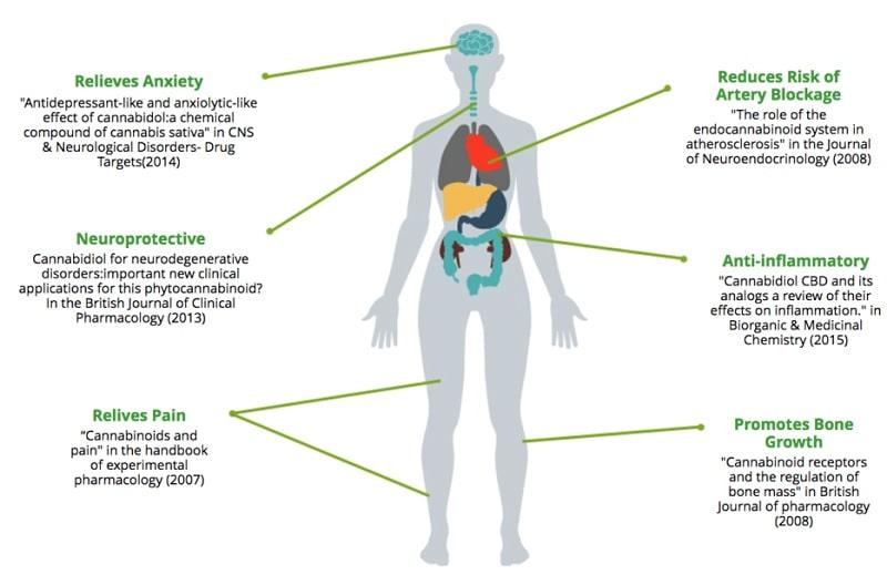 effets cbd cannabidiol santé
