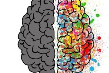 effets protéine foie fonctions cérébrales