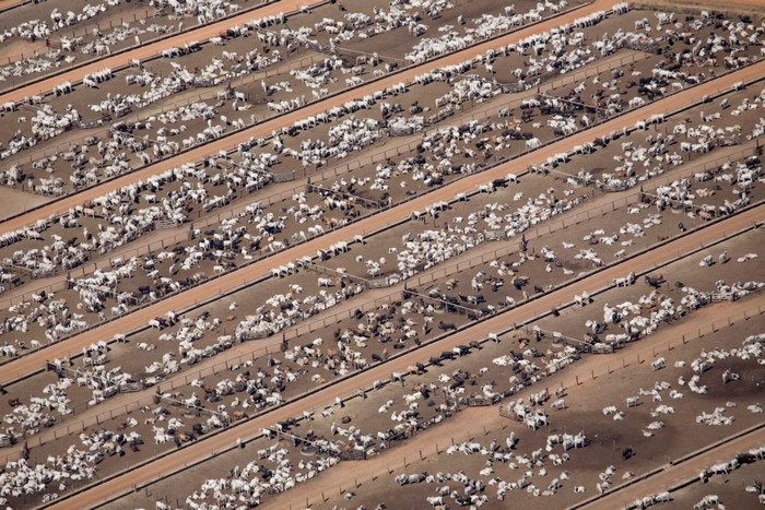 elevage bovins pollution azote