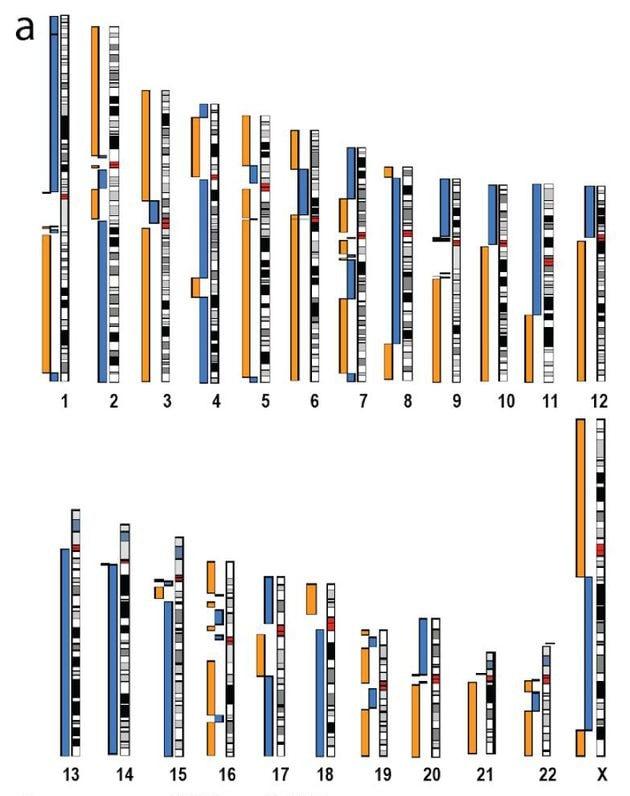 génome CHM13 séquençage par nanopores PacBio