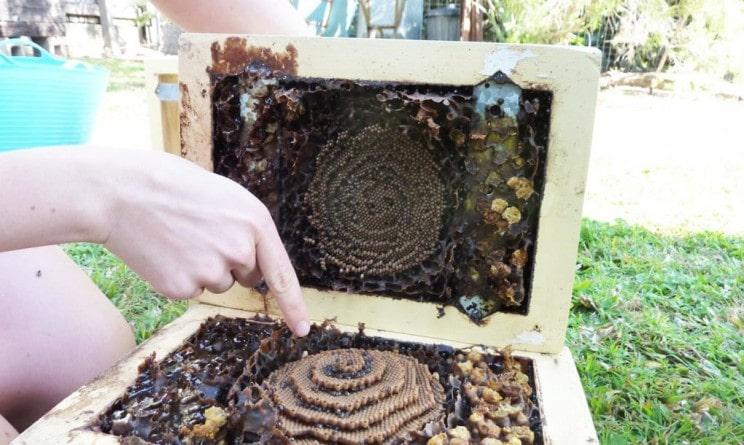 nid abeille spirale