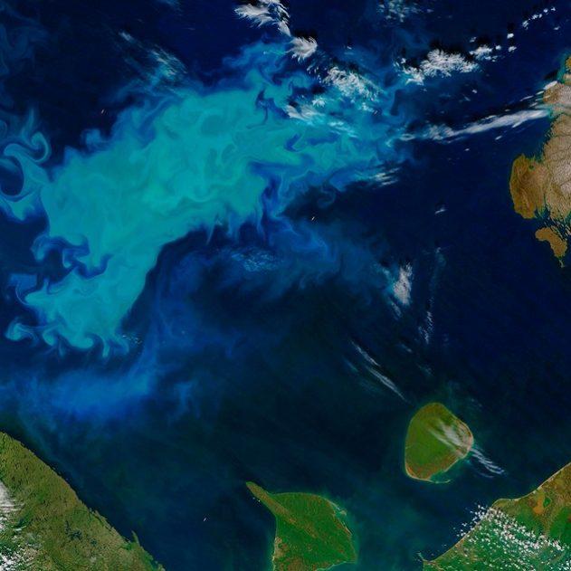 prolifération phytoplancton océan arctique