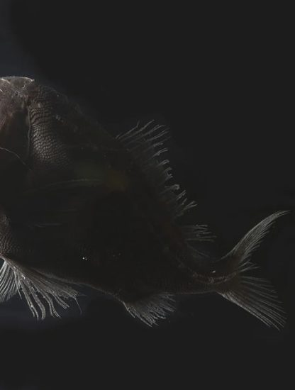 poisson vantablack