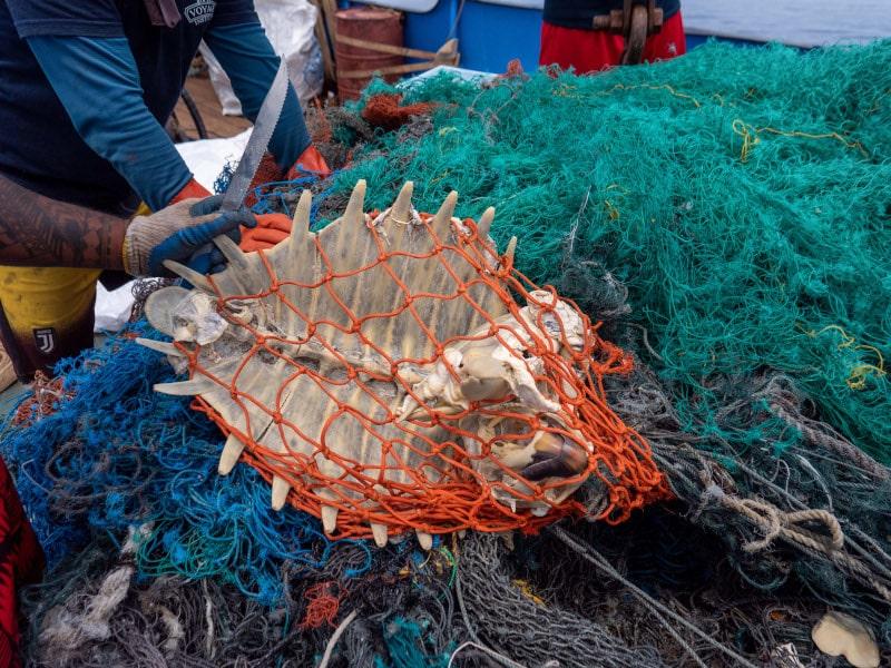 squelette tortue déchets filets pêche